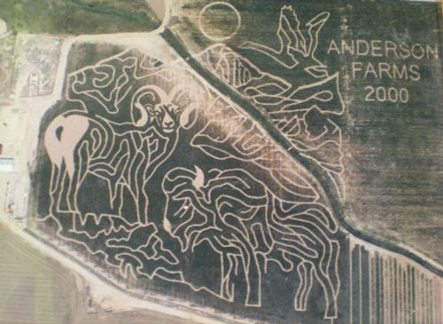 2000 Corn Maze