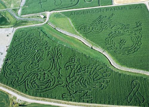 2003 Corn Maze